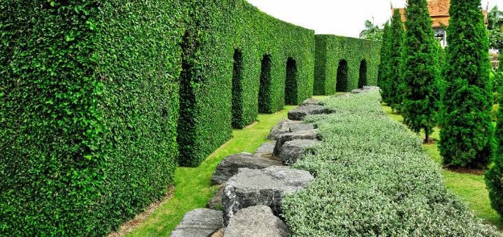 buxus alternatieven