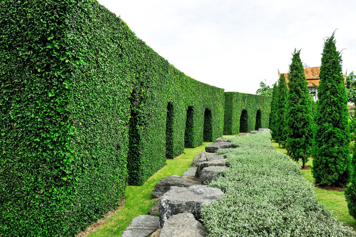 haagplanten