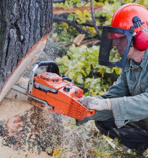kapvergunning bomen aanvragen