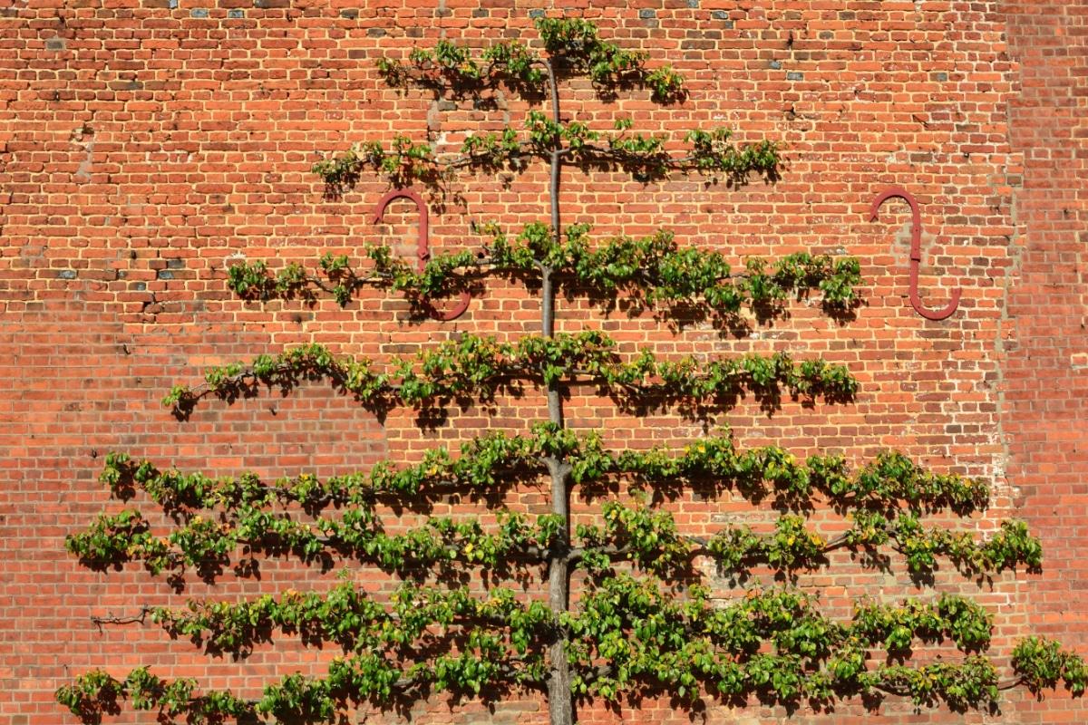 Spiksplinternieuw Leibomen: Soorten & tips voor het planten | Tuinpraat.be ZI-71
