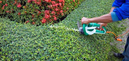 onderhoudsplan tuin