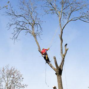 boom snoeien hoe