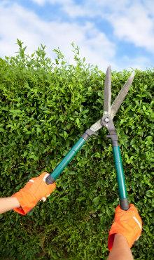 snoeien onderhoud tuin