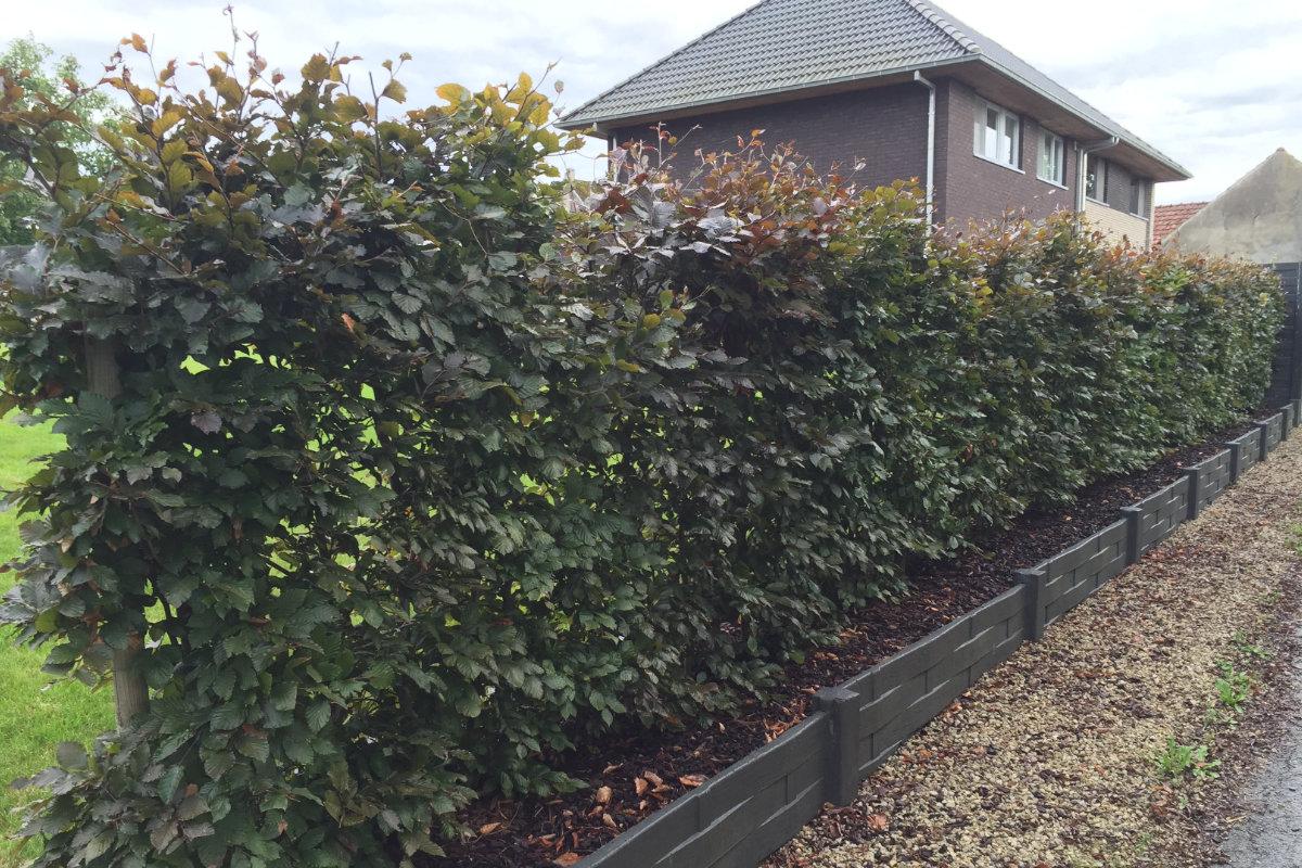 soorten hagen populaire haagplanten voor in de tuin prijs. Black Bedroom Furniture Sets. Home Design Ideas