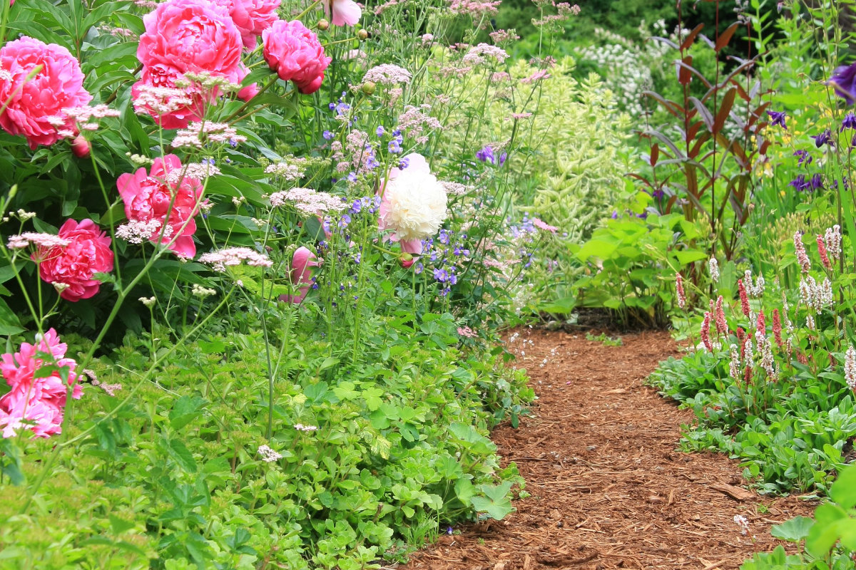tuinpad met houtsnippers
