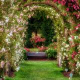 wanneer rozen snoeien